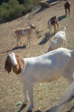 Goat hill 127.NEF